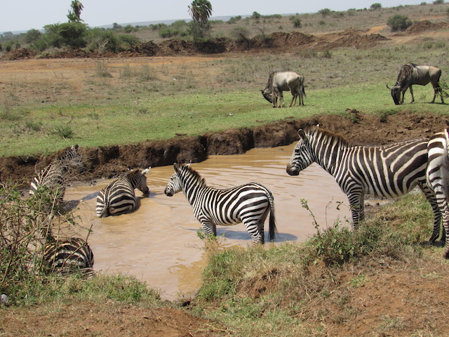 Edwards Africa Trip