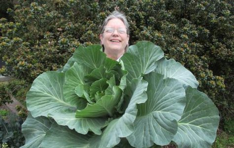 Clancy is barely visible behind one of the school cabbages.