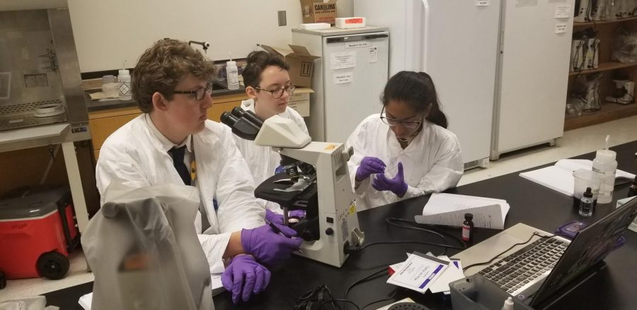GSMHS students perform the gram-staining process on bacterial slides and investigate characteristics under a microscope.