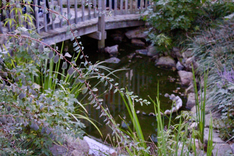 Vines+stretch+around+the+perimeter+of+the+pond.